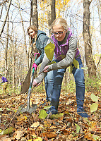 Students worked at removing invasive species of plants at Cool Creek Park in Westfield.  (L-R) Bella Donovan and Hannah DeHondt
