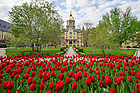 May 5, 2016; Tulips in full bloom in front of the Main Building.  (Photo by Barbara Johnston/University of Notre Dame)