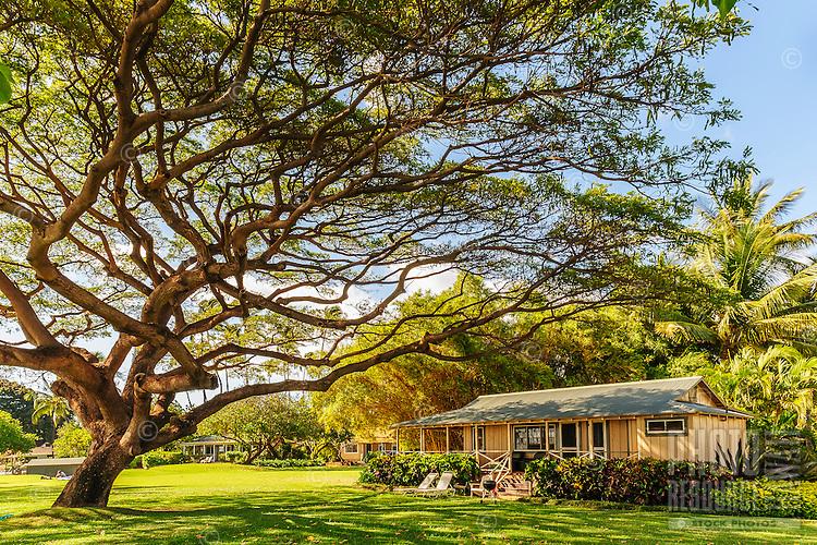 Shaded by a big tree at Waimea Plantation Cottages, Kaua'i