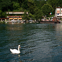Un cigno sul fiume Adda a Imbersago vicino al traghetto di Leonardo da Vinci...A white swan on the Adda at Imbersago near the ferry of Leonardo da Vinci.