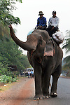 CAMBODIA  -  APRIL 5, 2005:  Two men ride an elephant through a village between Phnom Penh and Kampot on April 5th, 2005 in Cambodia.  (PHOTOGRAPH BY MICHAEL NAGLE).