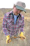 John Cox Setting Coyote Traps