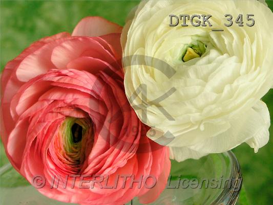 Gisela, FLOWERS, photos, white, pink flower(DTGK345,#F#) Blumen, flores, retrato