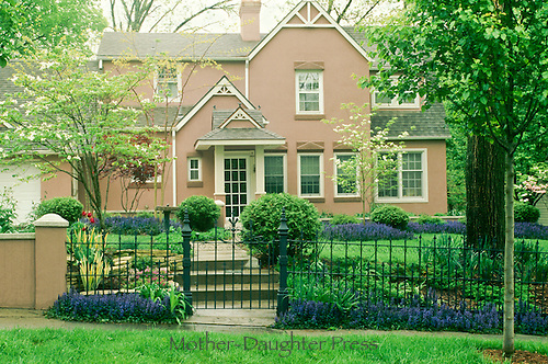 Stucco house with blooming purple Ajuga reptans and spring dogwood with tulips