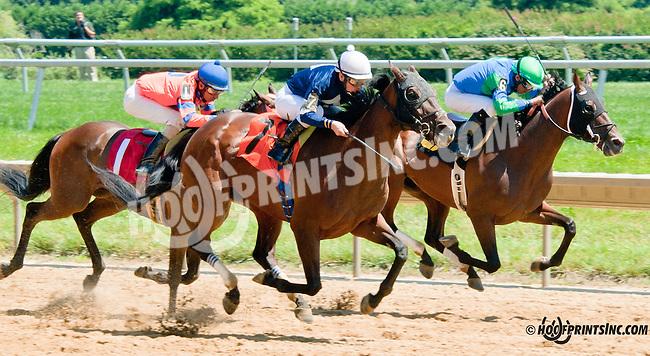 Quaterback Sneak winning at Delaware Park on 7/29/13