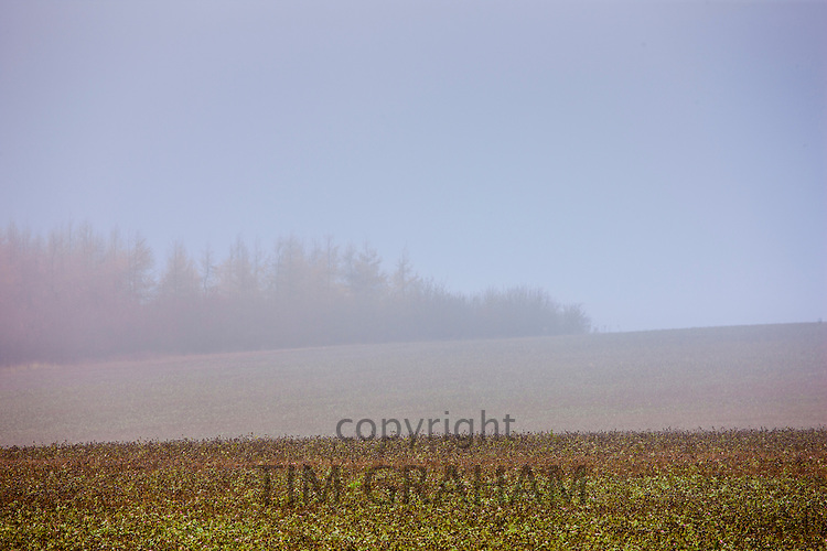 Misty scene at Barrington near Burford in The Cotswolds, Oxfordshire, UK