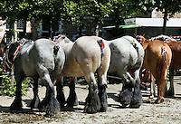 Middelburg.  Paarden met met gecoupeerde staarten.  Sinds 2001 is het verboden om staarten van paarden te couperen (amputeren) .