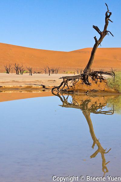 Deadvlei Landscape, Soussusvlei Red Dunes, Namibia, April 2008
