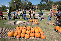 NWA Democrat-Gazette/J.T. WAMPLER Members of the Sequoyah United Methodist Church in Fayetteville form a pumpkin brigade Sunday Sept. 27, 2015 to unload several thousand pumpkins trucked in from Farmington New Mexico. The annual pumpkin sale benefits the church's youth ministries.