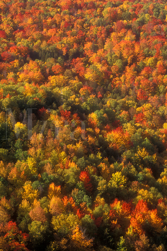 AJ5707, woodland, forest, wilderness, maple trees, background, autumn, An aerial view of a forest of colorful maple trees in the autumn in the state of Vermont.