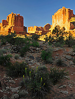 View south towards Park Avenue's sandstone rock monoliths bathed by sunrise light with Prince's Plume flowering in foreground. Arches National Park, Moab, Utah.
