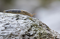 While we waited for larger wildlife, we spent time photographing slugs.