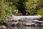Great Bear Rainforest Cruise