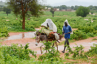 CHAD, Goz Beida, refugee camp Djabal for refugees from Darfur, Sudan, man and woman transport firewoods on donkey to the camp / TSCHAD, Goz Beida, Fluechtlingslager Djabal fuer Fluechtlinge aus Darfur, Sudan, Transport von Feuerholz auf Esel