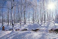 R.Swenson  mushing near Knik chkpt./ Iditarod '96