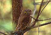 Carl, ANIMALS, wildlife, photos(SWLA2155,#A#)