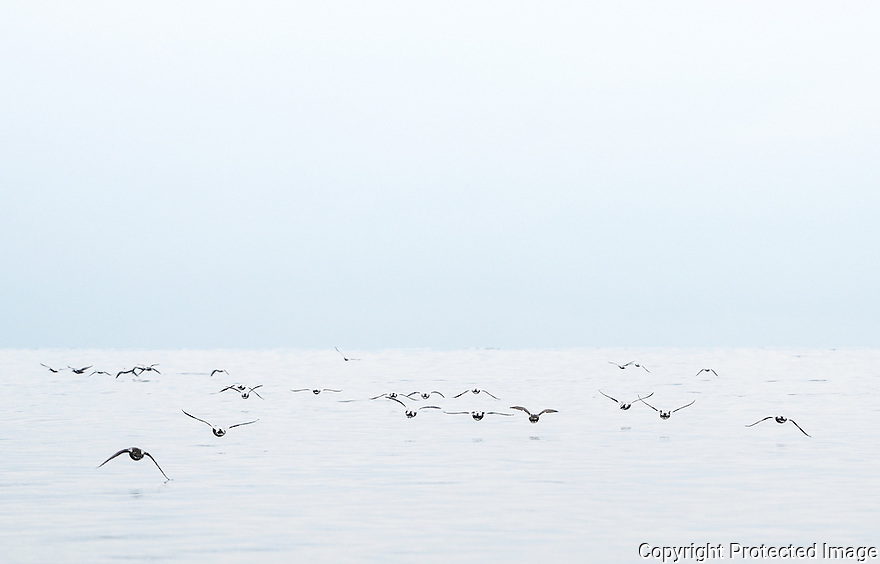 Flying seabirds in the open ocean