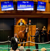Hip #10 by American Pharoah, out of J Z Warrior, a colt bred in Kentucky and consigned by Vanmeter Gentry Sales Agent Xii sells for $800,000 on Day 1 of the Fasig Tipton Saratoga Select Yearling Sale at the Humphrey S. Finney Sales Pavilion on August 6, 2018 in Saratoga Springs, New York.