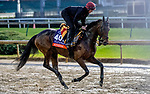 November 1, 2018: Athena (IRE), trained by Aidan P. O'Brien, exercises in preparation for the Breeders' Cup Filly & Mare Turf at Churchill Downs on November 1, 2018 in Louisville, Kentucky. Carolyn Simancik/Eclipse Sportswire/CSM