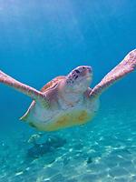 CDT-Turtle Beach Taxi Max Curacao Tour - as part of HAL Koningsdam S. Caribbean Cruise, Curacao 3 19