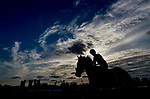 HALLANDALE BEACH, FL - JANUARY 25: Horses exercise at sunrise during morning workouts as horses prepare for the Pegasus World Cup Invitational at Gulfstream Park Race Track on January 25, 2018 in Hallandale Beach, Florida. (Photo by Scott Serio/Eclipse Sportswire/Breeders Cup)