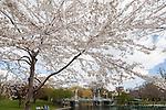 Boston Public Garden, Boston, Massachusetts, USA