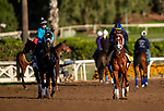 OCT 29: Todd Pletchers contenders Coal Front and Vino Rosso on track at Santa Anita Park in Arcadia, California on Oct 29, 2019. Evers/Eclipse Sportswire/Breeders' Cup