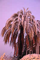 A palm tree covered with snow in the quarter of Pigneto in Rome, in the early morning (February 2012). Digitally Improved Photo.