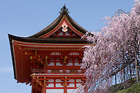 Kiyomizu-Dera temple in Kyoto, Japan in spring time with cherry blossoms.