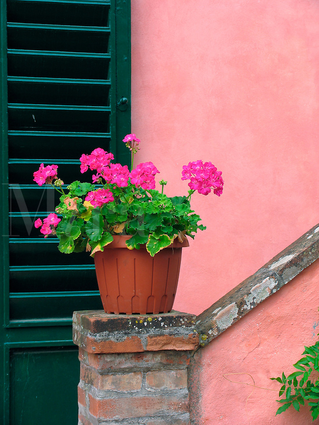 Potted geraniums on pedestal with shuttered doorway