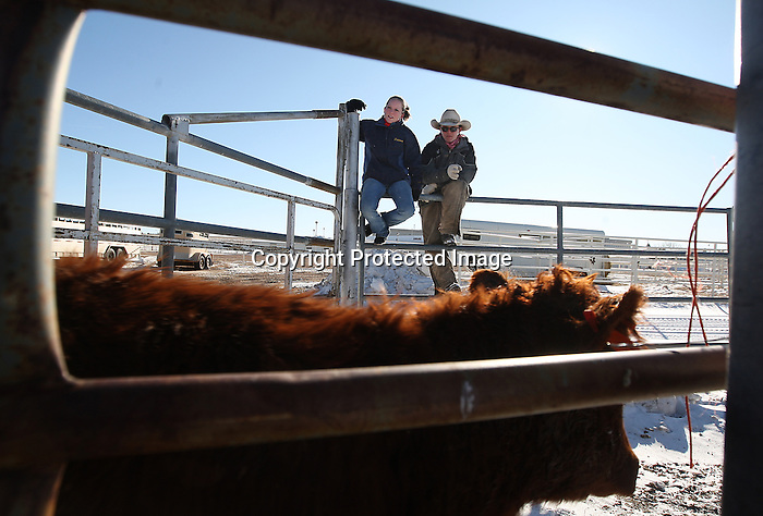 Laramie County Community College students Brittany Norman and Jarid Garner watch cattle be unloaded on campus Thursday afternoon. The cattle were brought in for the Pre-Denver Ranch Horse competition that is taking place this weekend.  Michael Smith/staff