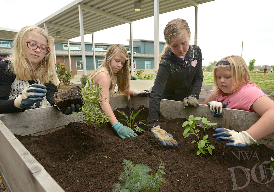 NWA Democrat-Gazette/BEN GOFF @NWABENGOFF<br /> Lauren Milligan (from left), Lauren Richardson, Kaitlyn Stancliffe and Ainsley Bosecker, all 5th graders, plant purple coneflower, bee balm and lemon basil plants on Monday April 25, 2016 during their physical education class at Bright Field Middle School in Bentonville. Students at the school have been learning to grow vegetables, herbs and flowering plants in the school garden.
