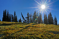 Sunburst in alpine meadow of wildflowers (Indian paintbrush). Cascade Mountains, E.C. Manning Provincial Park, British Columbia, Canada
