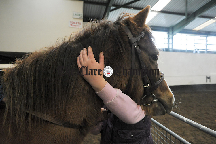 Keeping the pony calm before competition  at the Clare Pony Club annual show in Ennis. Photograph by John Kelly.