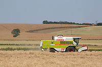 Harvesting oilseed rape in thirty two  degre heat<br /> &copy;Tim Scrivener Photographer 07850 303986<br />      ....Covering Agriculture In The UK....