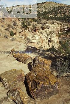 A petrified log, morrison formation. Escalante State Park, Utah