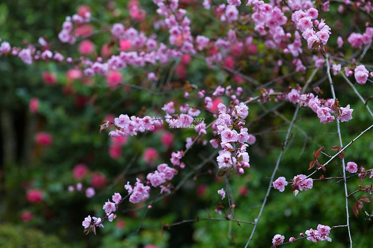 The Japanese Garden in Portland, Oregon's Wasington Park