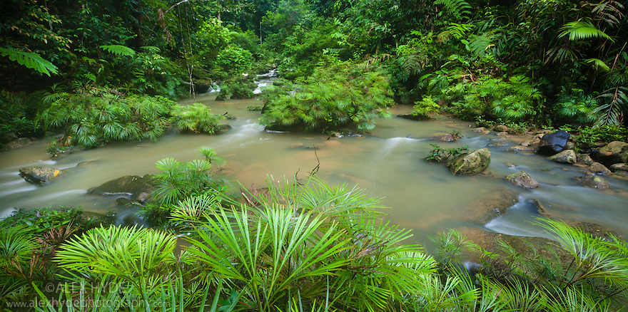 Tributary of the Maliau River flanked with Riverine Fern {Dipteris lobbiana}. Souhern Plateau of Maliau Basin, Sabah's 'Lost World', Borneo.