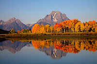 Ever present snow fields on Mount Moran in Grand Teton National Park have survived the summer heat and lead the way into fall. Oxbow Bend, Grand Teton NP.