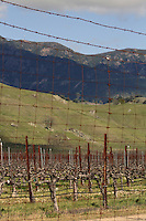 A vineyard poised between illuminated hills and a wire fence near Geyserville in Sonoma County in Northern California.