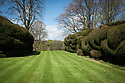 Cloud-pruned topiary yew hedge, Hinton Ampner, Hampshire, late April.