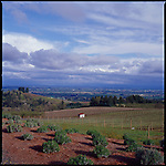 View of the Oregon Wine Country from The Black Walnut Inn Dundee Oregon