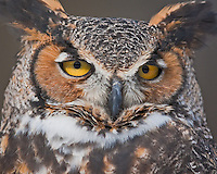 A close-up of an owl at the Howell Nature Center in Michigan.