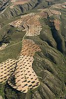olive grove Aerial views farmland, La Mancha, near Algodor and Ocana, Toledo, Spain