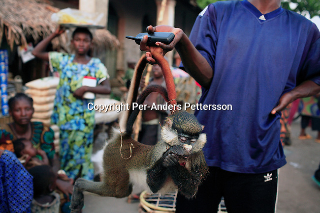 BUMBA, DEMOCRATIC REPUBLIC OF CONGO MARCH 25: An unidentified man has just bought a dead monkey at an animal market on March 25, 2006 outside Bumba, Congo, DRC. Monkeys are a popular food for Congolese but its quite expensive. Bumba is an important port between Kisangani and Kinshasa, a distance of about 1750 kilometers. The Congo River is a lifeline for millions of people, who depend on it for transport and trade. Congo is planning to hold general elections by July 2006, the first democratic elections in forty years..(Photo by Per-Anders Pettersson).