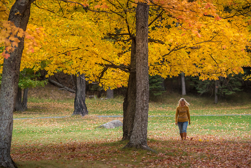 A walk beneath a fall color canopy at Presque Isle Park in Marquette, Michigan.