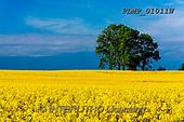 Marek, LANDSCAPES, LANDSCHAFTEN, PAISAJES, photos+++++,PLMP01011W,#L#, EVERYDAY
