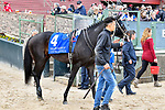 HOT SPRINGS, AR - APRIL 14: Oaklawn Handicap. Oaklawn Park on April 14, 2018 in Hot Springs,Arkansas. #4 Untrapped (Photo by Ted McClenning/Eclipse Sportswire/Getty Images)