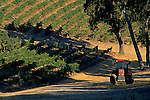 Morning light on vineyards & Tractor along Vineyard Drive, Paso Robles, San Luis Obispo County, California