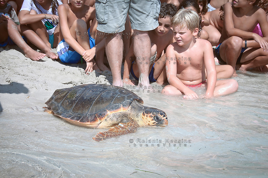Palermo, una tartaruga caretta caretta viene rilasciata nella spiaggia di Mondello dopo essere stata guarita dai volontari del WWF.<br />